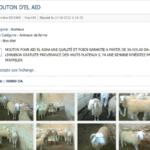 moutons-sur-le-web.png